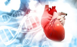 Cardialysis - Wekke | BBM Schoonmaakdiensten